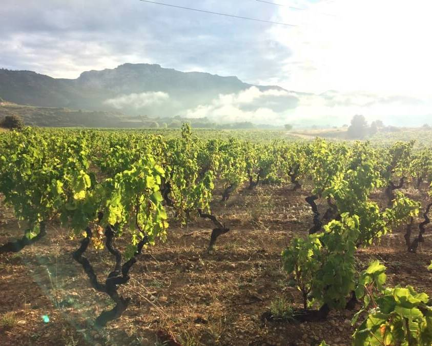 Rioja Vineyards - Bodegas Bohedal