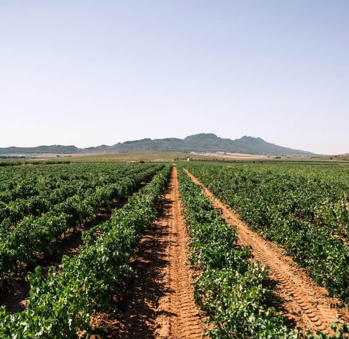 Vineyards La Purisima