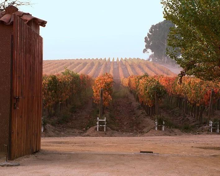 Casa Silva Vineyards