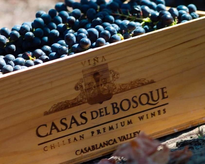 Grapes at Casas del Bosque