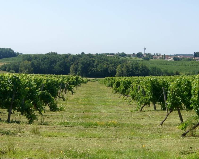 Chateau Graula Vineyards