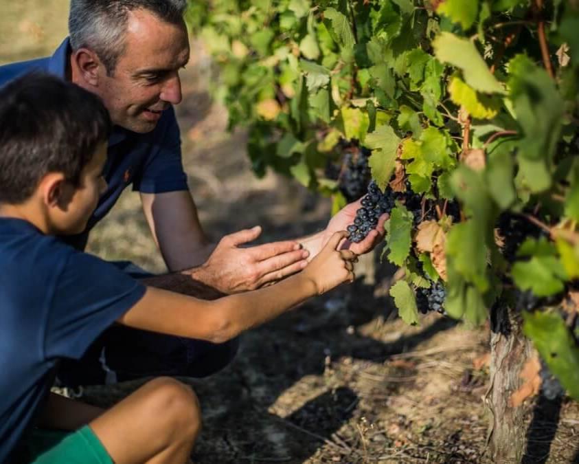 The Vineyards at Chateau La Verriere