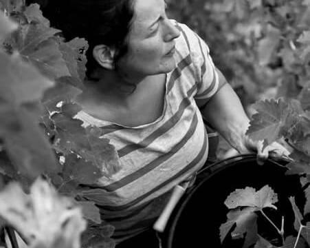 Harvesting at Domaine Aleofane