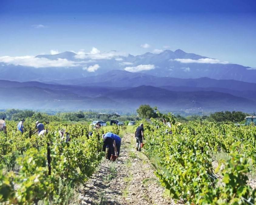 Domaine Fontanel Vineyards