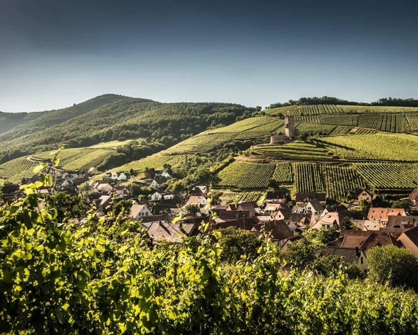 Katzenthal Vineyards Domaine Meyer Fonne