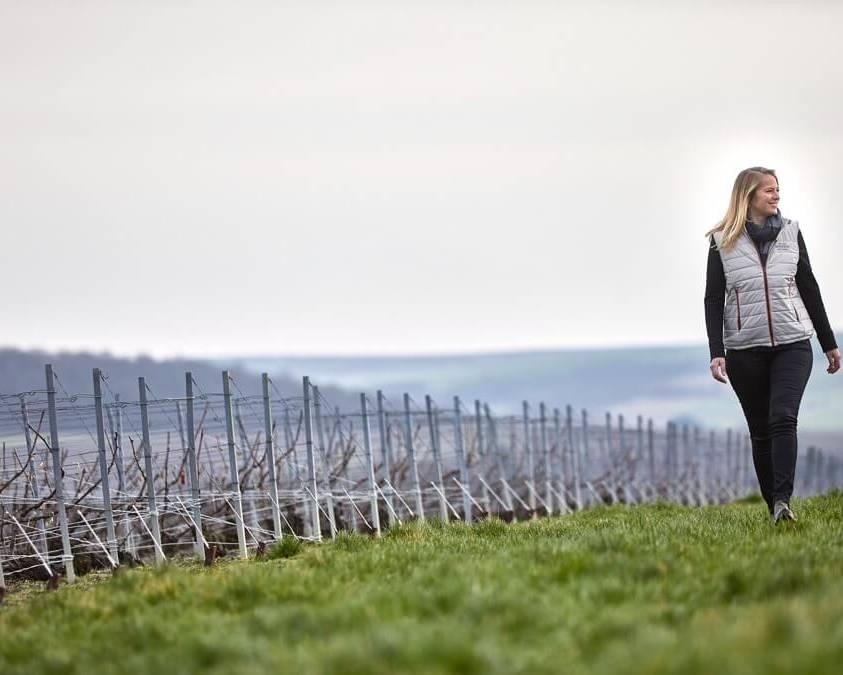 A walk through the Henriot Vineyrds