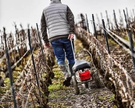 Vineyards at Champagne Henriot