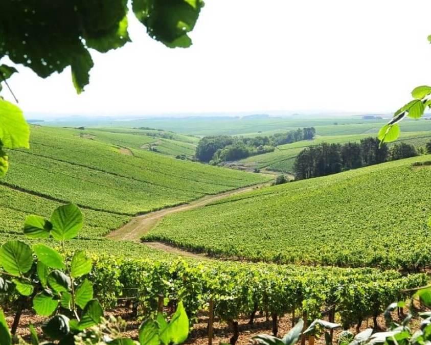 Seguinot Bordet Chablis vineyards