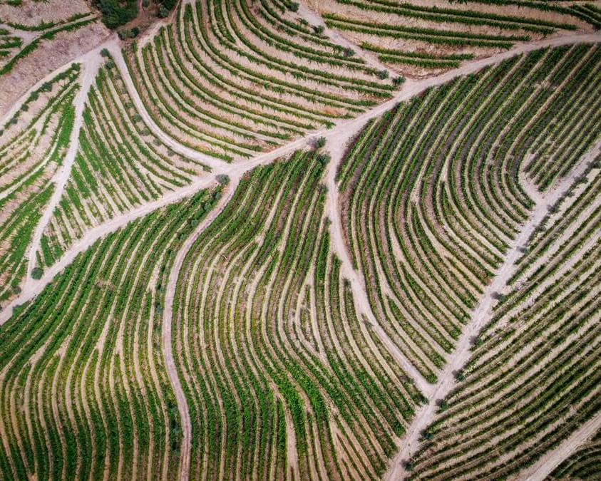 Patchwork vineyards Smith Woodhouse