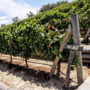 Bodeags Atamisque Vineyards Malbec